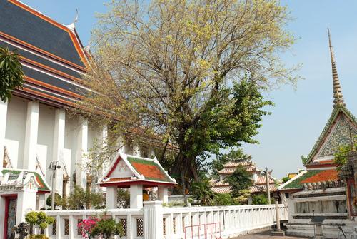 Drzewo Bodhi Wat Pho Bangkok