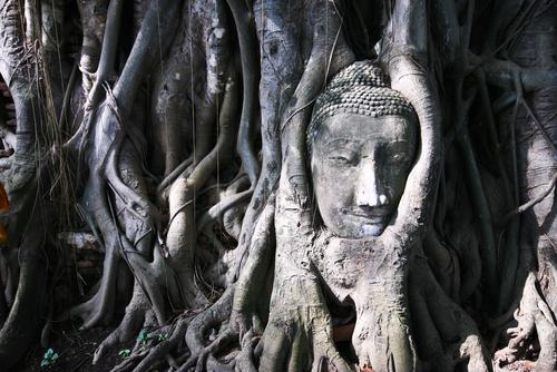 Dzrewo obrastajace głowe Buddy w Wat Mahathat w Ayutthaya