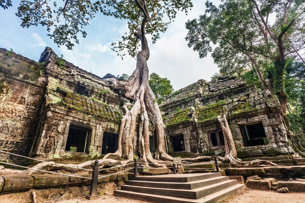 Ta Prohm Cambodia - drzewo wrastające w budynki w świątyni w Kambodży